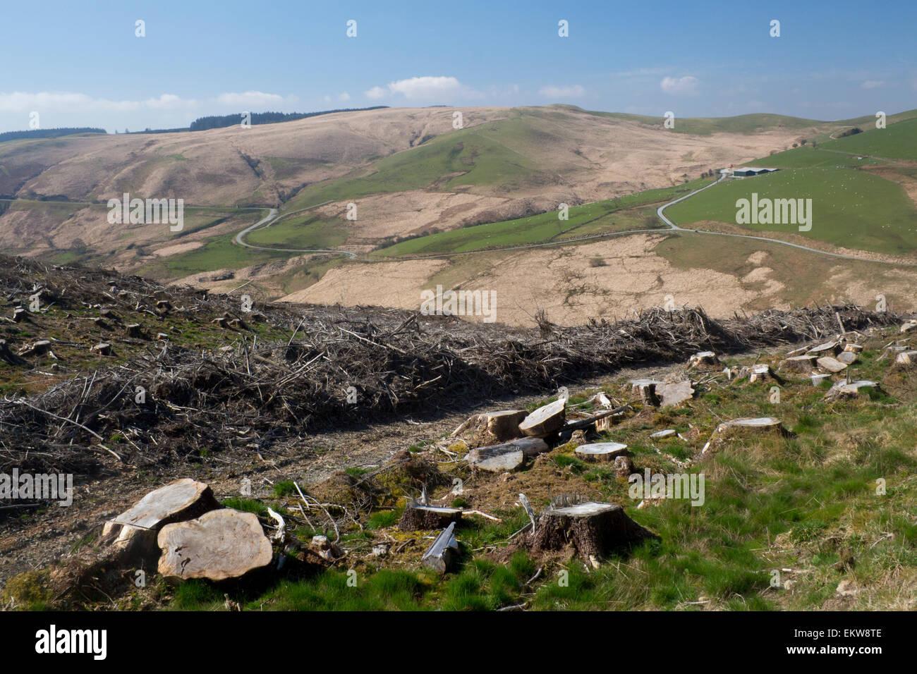 La deforestación en la remota campiña de Gales cerca de Llyn Brianne Ceredigion Mid Wales UK Imagen De Stock