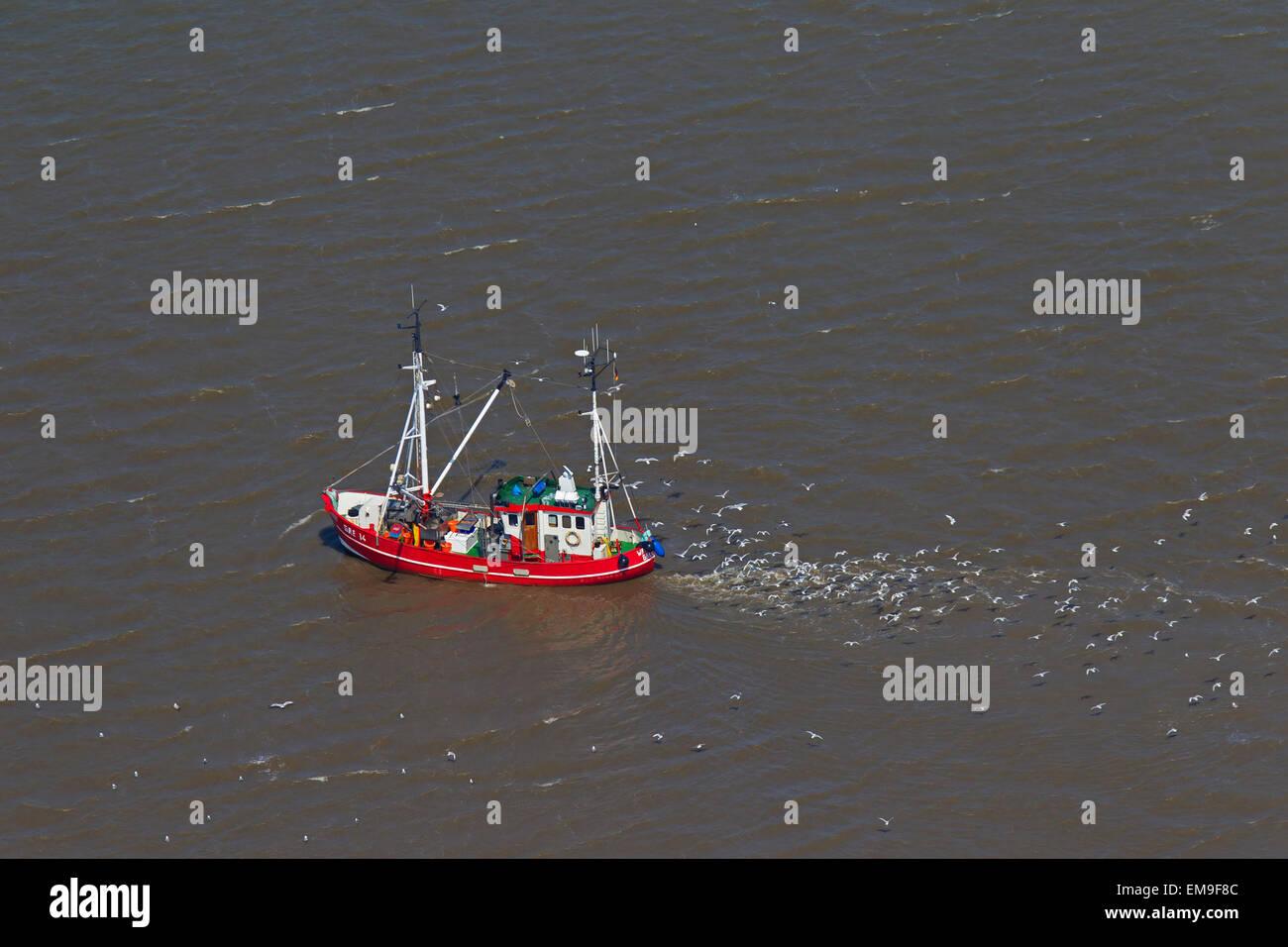 Vista aérea de camarones rojos barco arrastrero la pesca de camarones en el mar, seguidos por las gaviotas Foto de stock