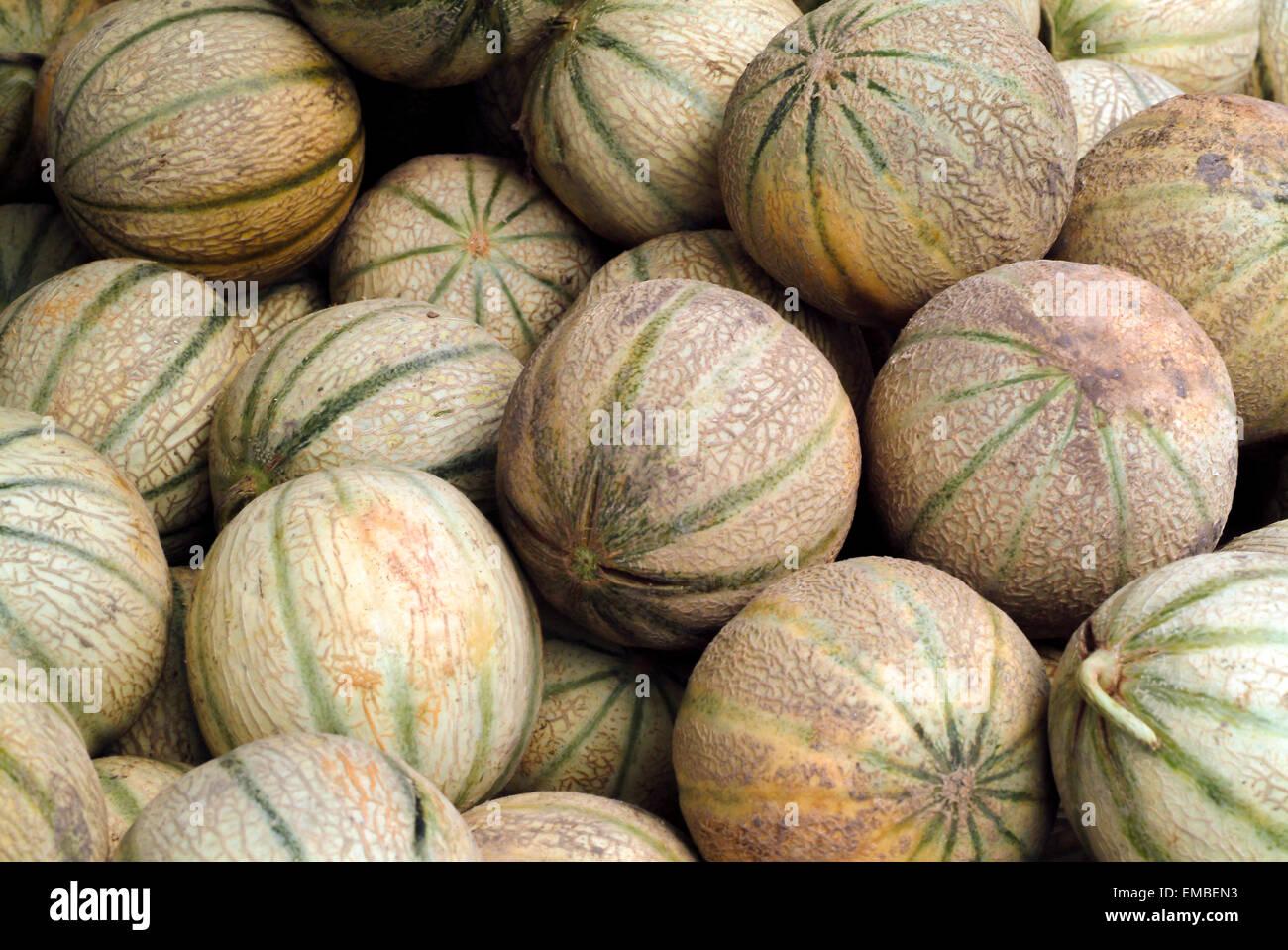 Muskmelon o melón cantaloupe o compensado en un mercado stand en Provence Francia Imagen De Stock