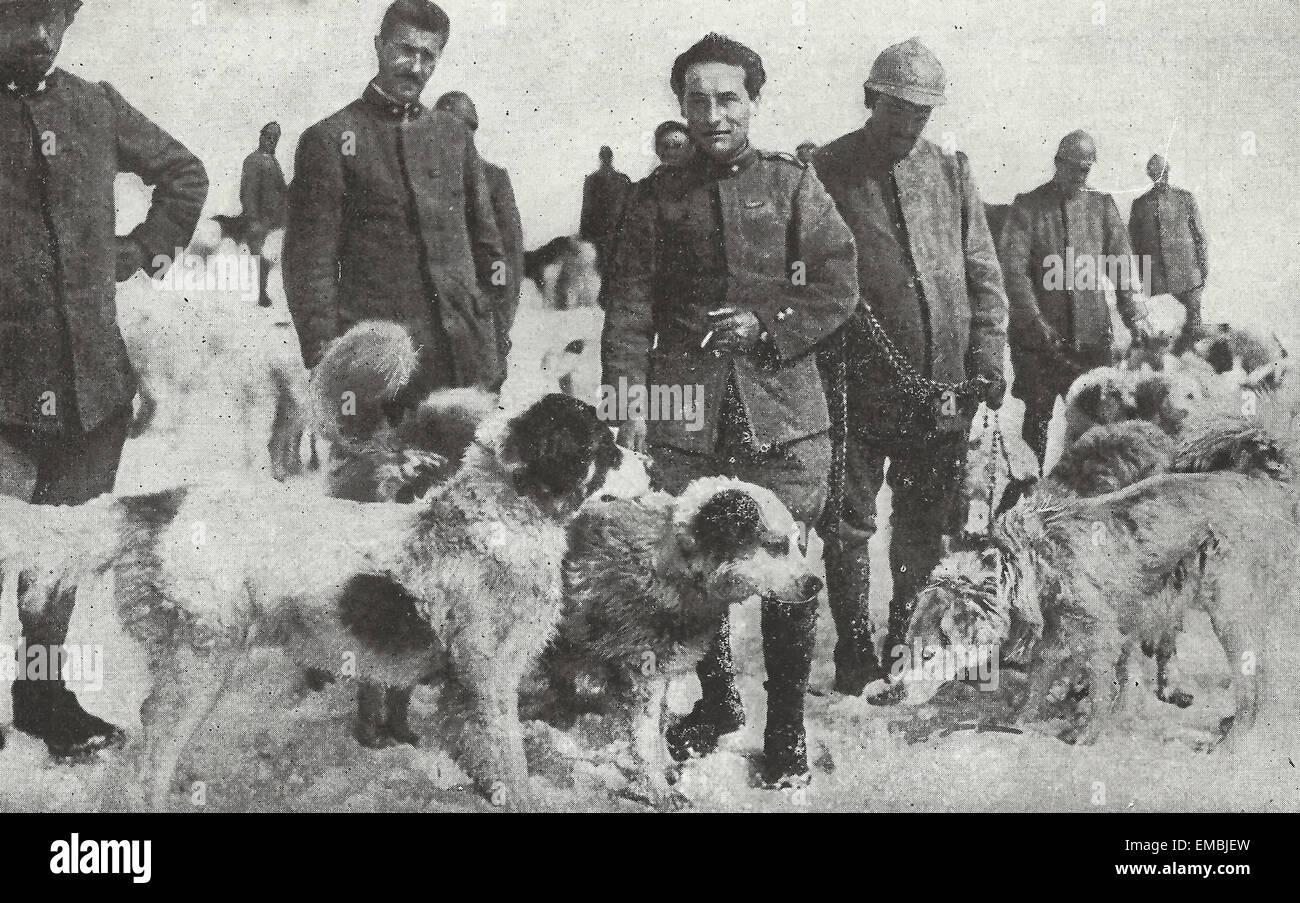 San Bernardo perros listos para un viaje a través de la montaña - Italia, la I Guerra Mundial Imagen De Stock