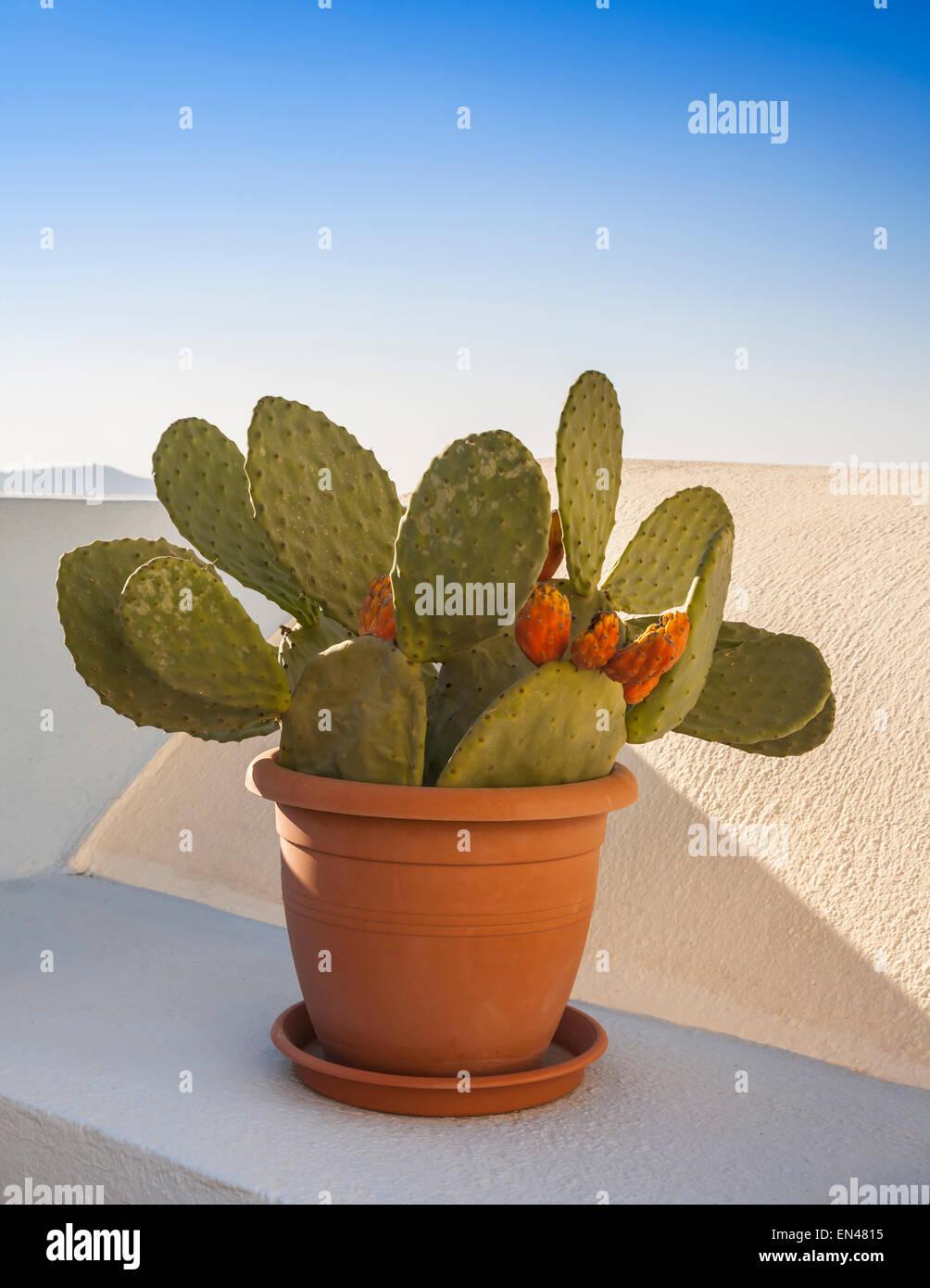 Cactus en maceta pequeña en un recipiente de terracota en una cornisa. Imagen De Stock