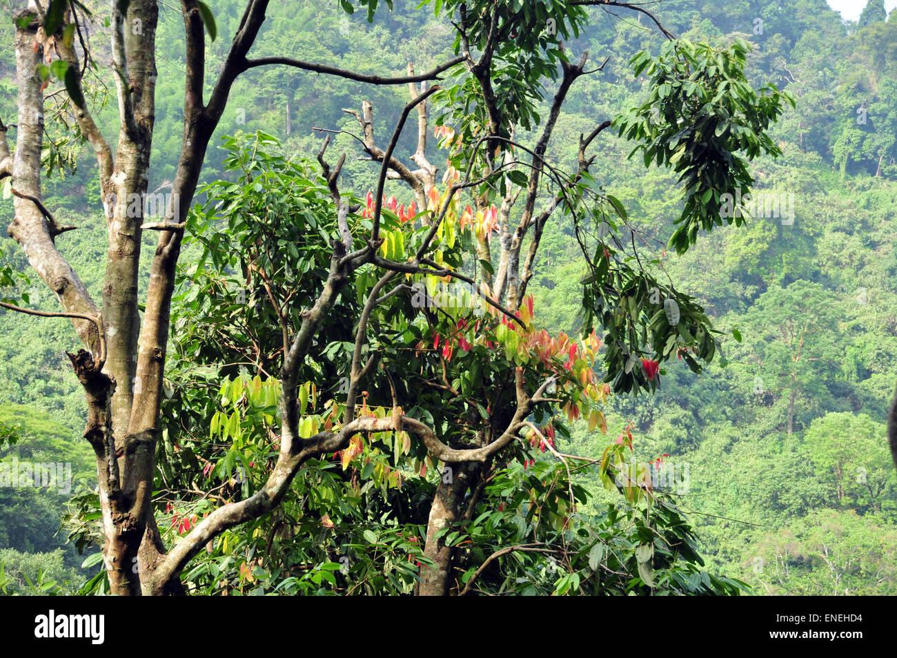 Árbol con hojas tiernas de color. Imagen De Stock