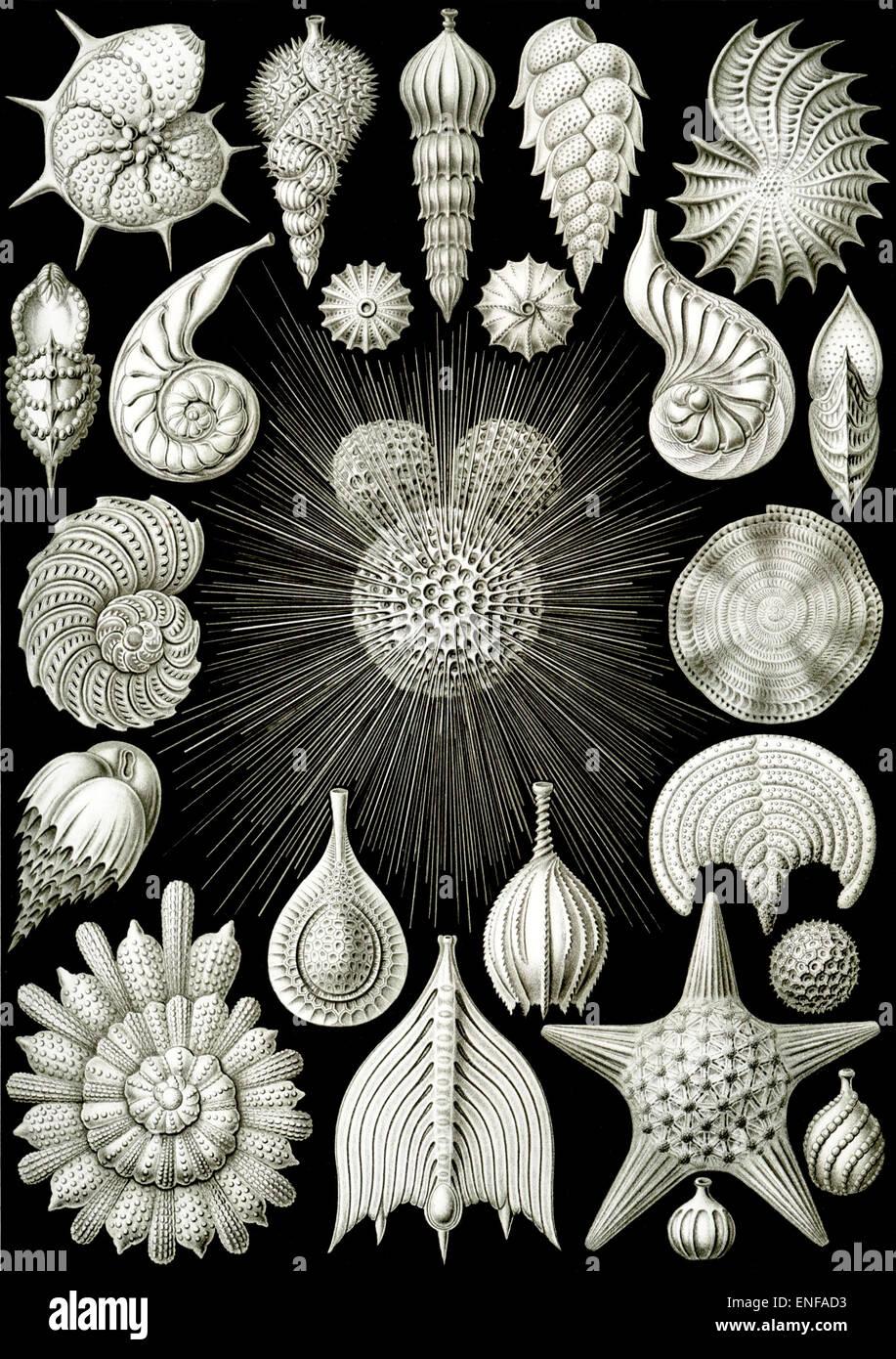 (Thalamphora plancton marino), por Ernst Haeckel, 1904 - sólo para uso editorial. Foto de stock