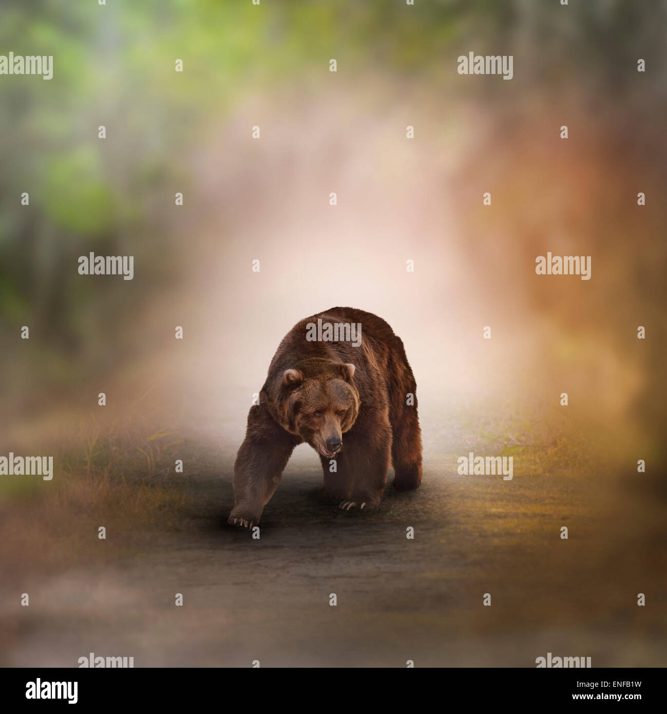 Grizzly Bear caminando en el bosque. Imagen De Stock
