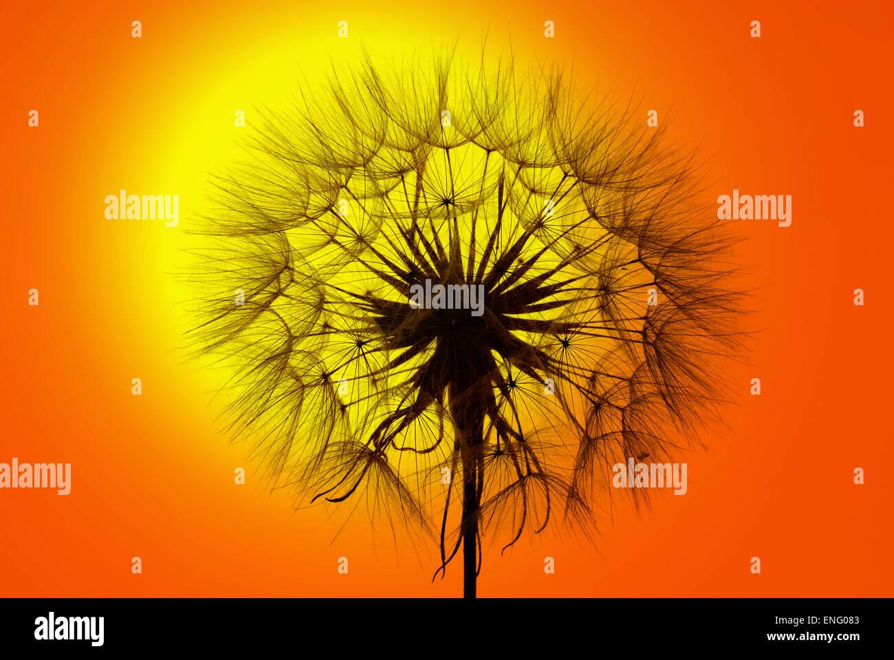 Cabeza de viento en contra de la creación closk golden naranja cálido resplandor del sol del atardecer Imagen De Stock
