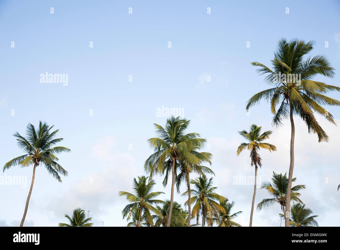 Árboles de Palma Foto de stock
