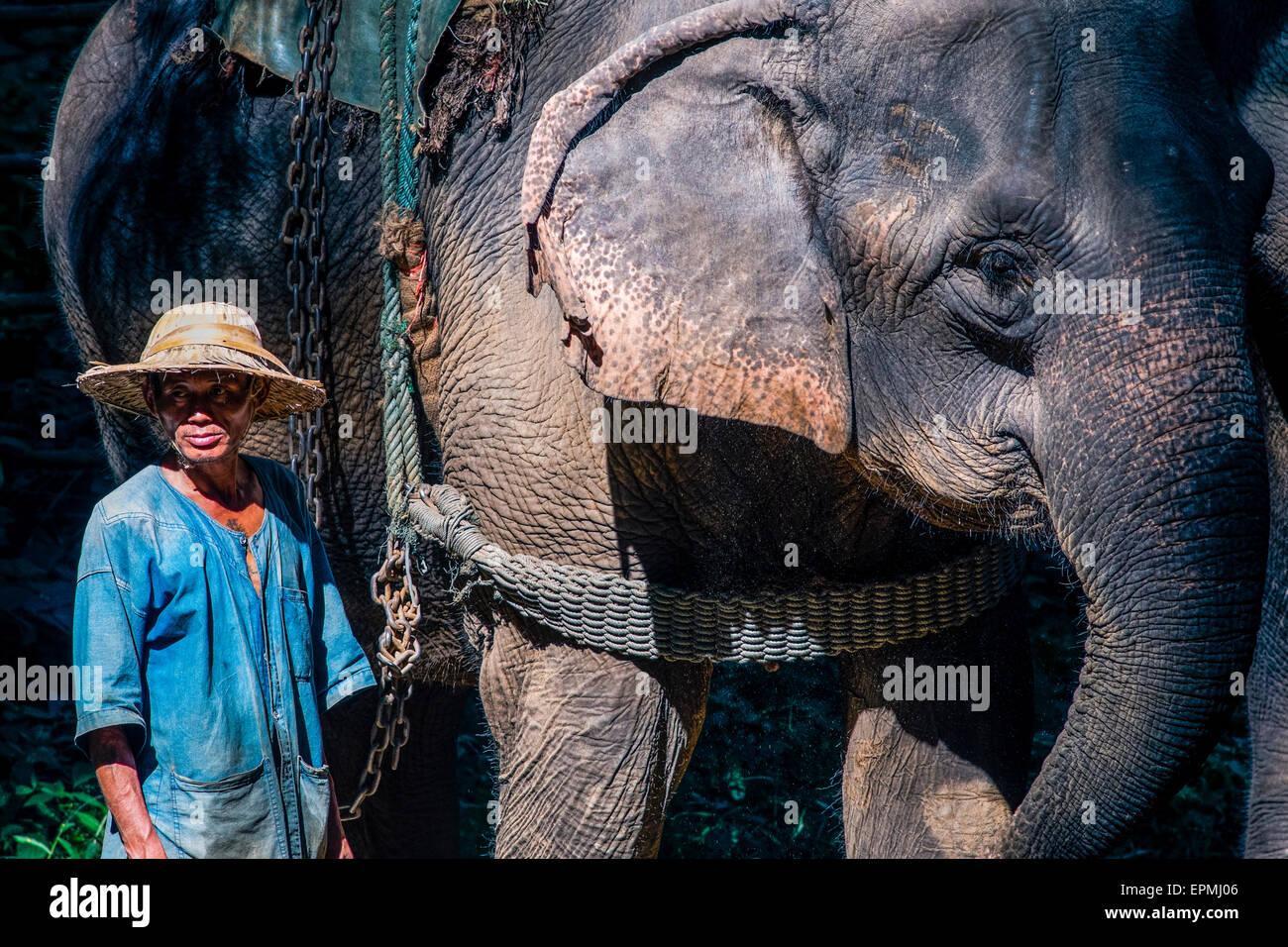 Asia. Tailandia Chiang Dao. Centro de elefantes. Mahout y su elefante. Foto de stock