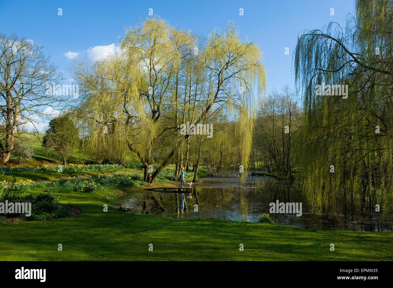 Una mujer y un perro parado sobre un embarcadero en un lago, con sauce llorón frondes, llegando hasta el agua. Imagen De Stock