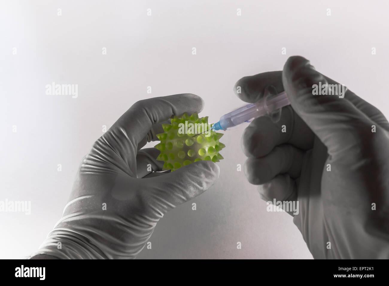 Dos manos revestido de látex inyectando una jeringa hipodérmica en una gran virus verdes sobre fondo blanco. Foto de stock