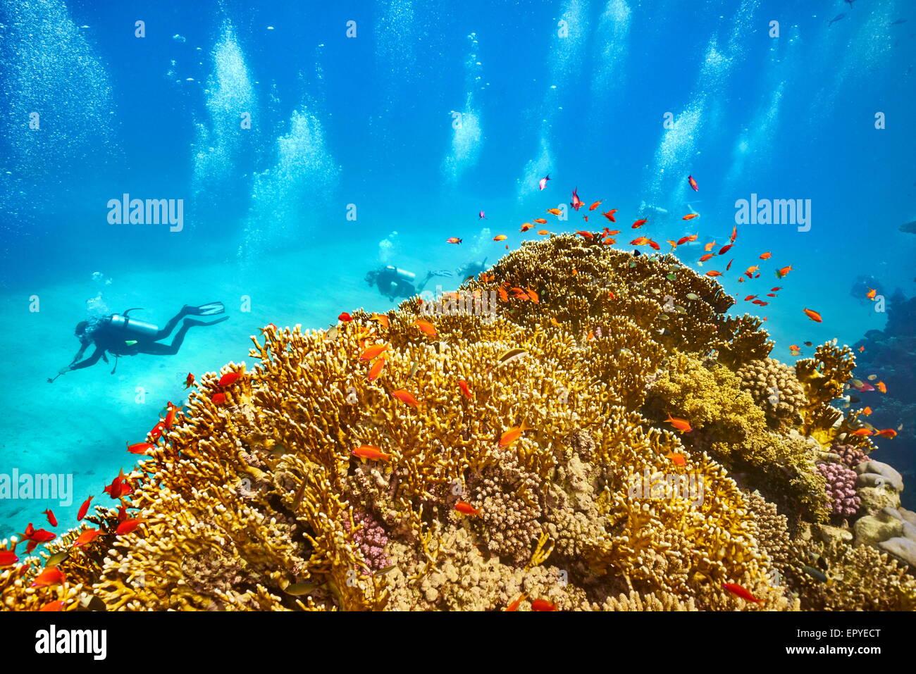 Marsa Alam, Mar Rojo - vista submarina a submarinistas y el arrecife Imagen De Stock