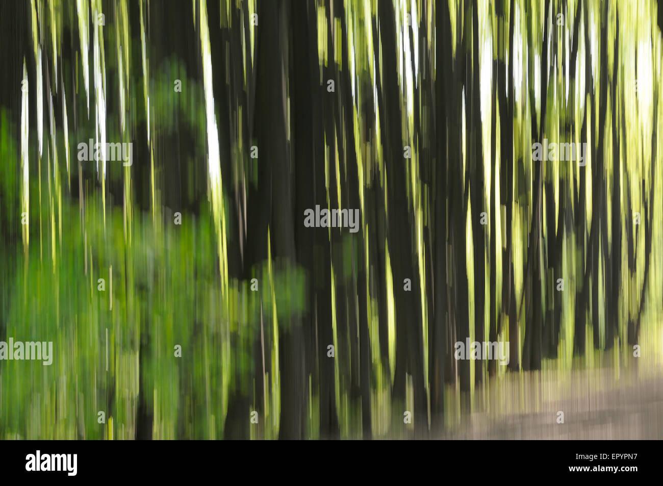 Spring Forest abstracción con intencionalmente moviendo la cámara Foto de stock