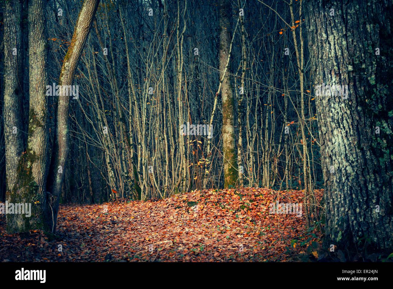 Bosque bosque de árboles de madera de árbol Imagen De Stock