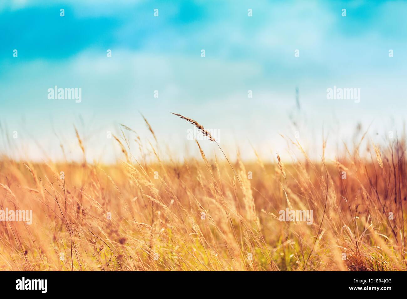 Campo Hermoso y cielos azules Foto de stock