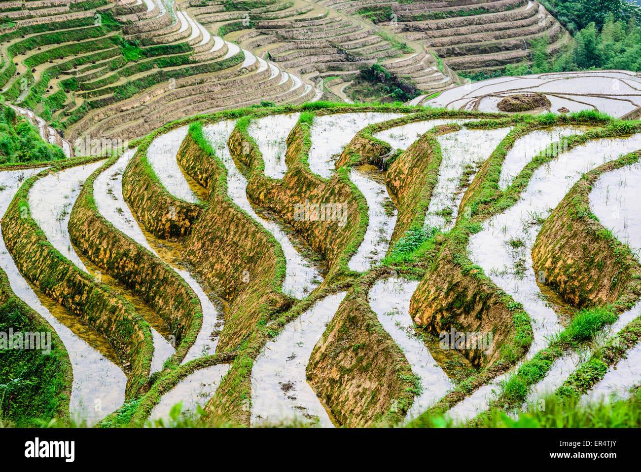 Yaoshan Montaña, Guilin, China terrazas de arroz en la ladera del paisaje. Foto de stock