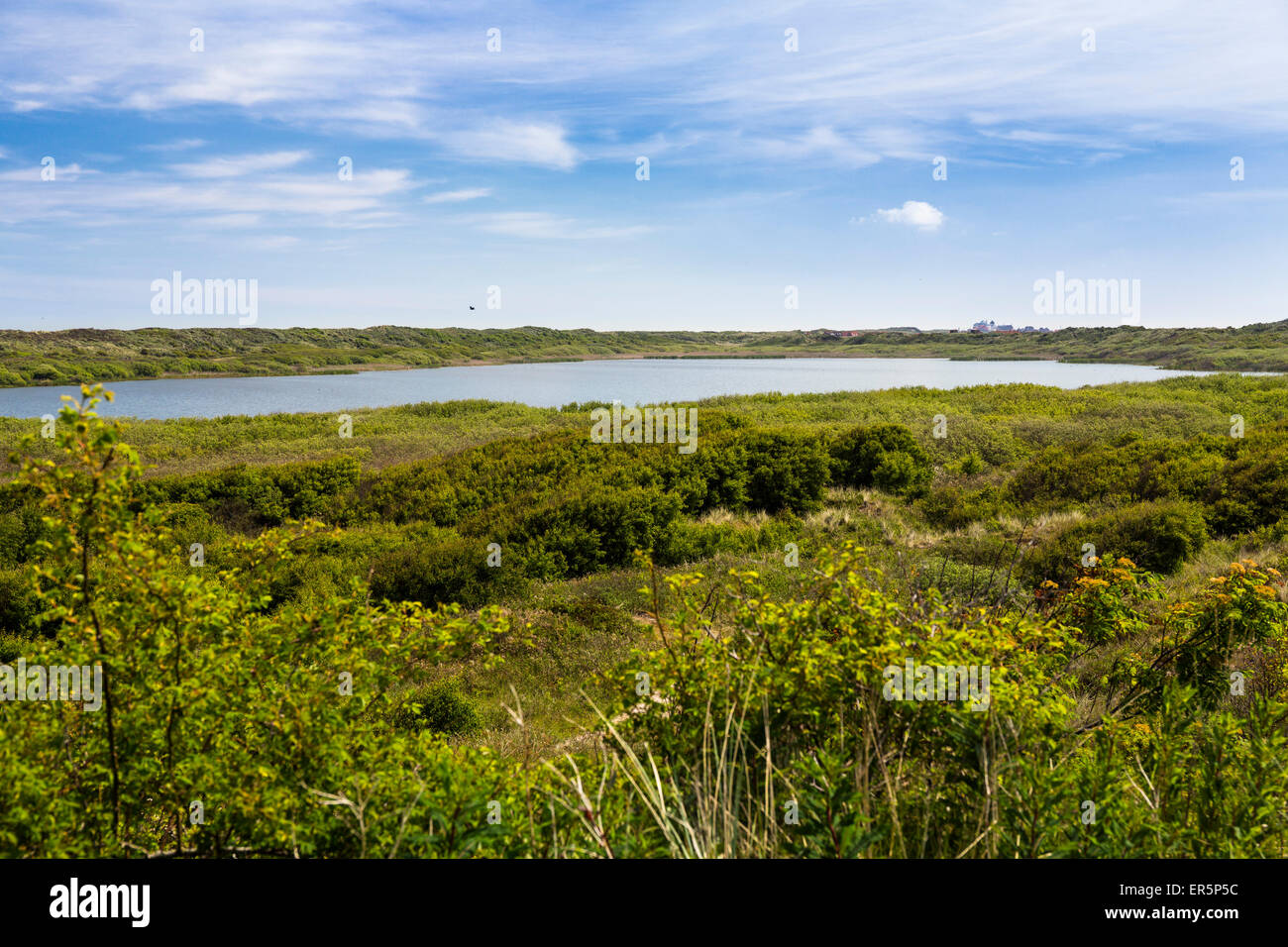 Martillo de lago, isla Juist, Parque Nacional, Mar del Norte, Islas de Frisia Oriental, Frisia Oriental, Baja Sajonia, Imagen De Stock