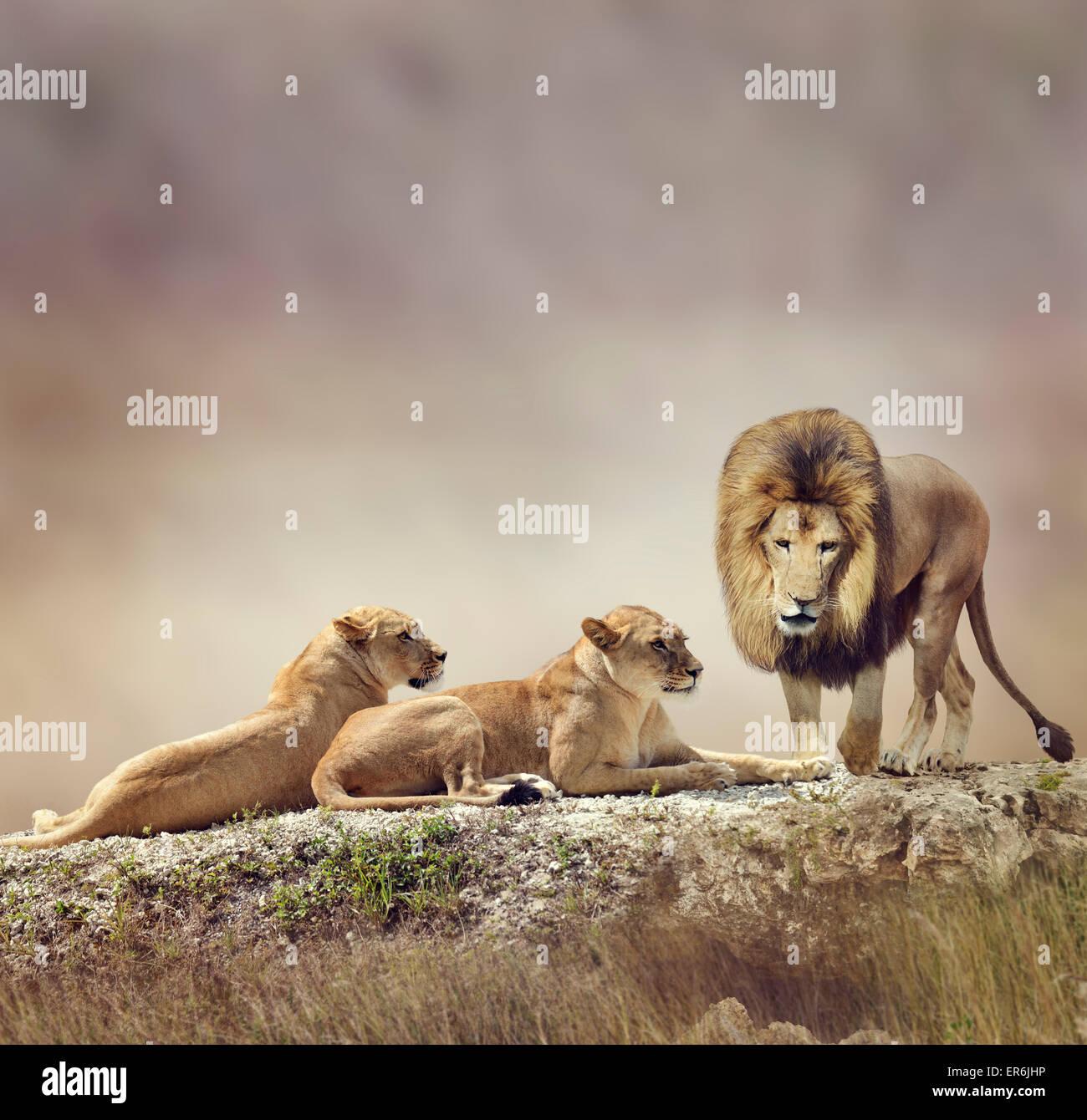 Familia de leones sobre una roca Imagen De Stock