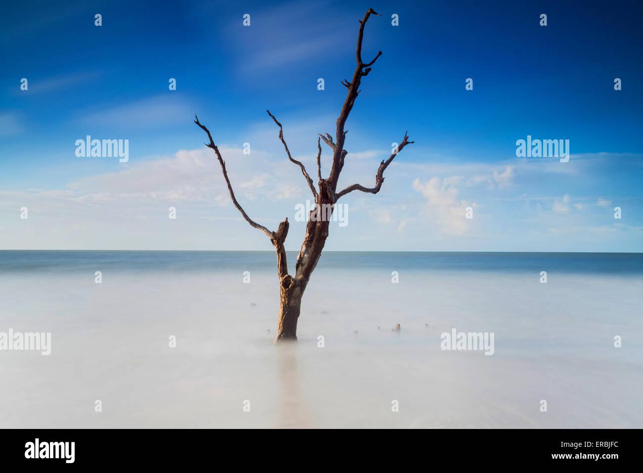 La luz de la mañana temprano en el Boneyard Beach en la Bahía Botany en Edisto Island, Carolina del Sur. Imagen De Stock