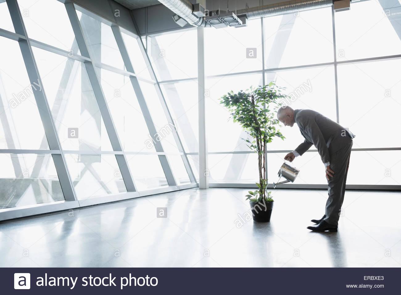 Árbol en maceta riego empresario en la oficina moderna Imagen De Stock