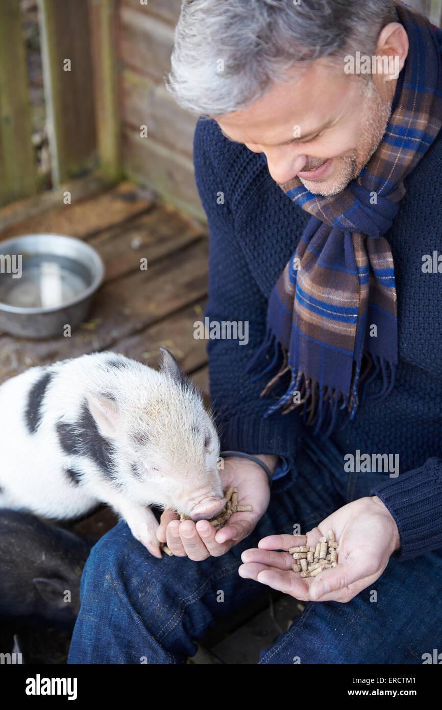 Hombre maduro Alimentar mascota cerdo Micro Imagen De Stock