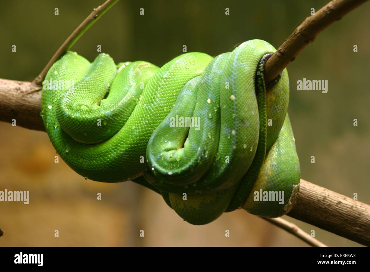 serpiente Imagen De Stock