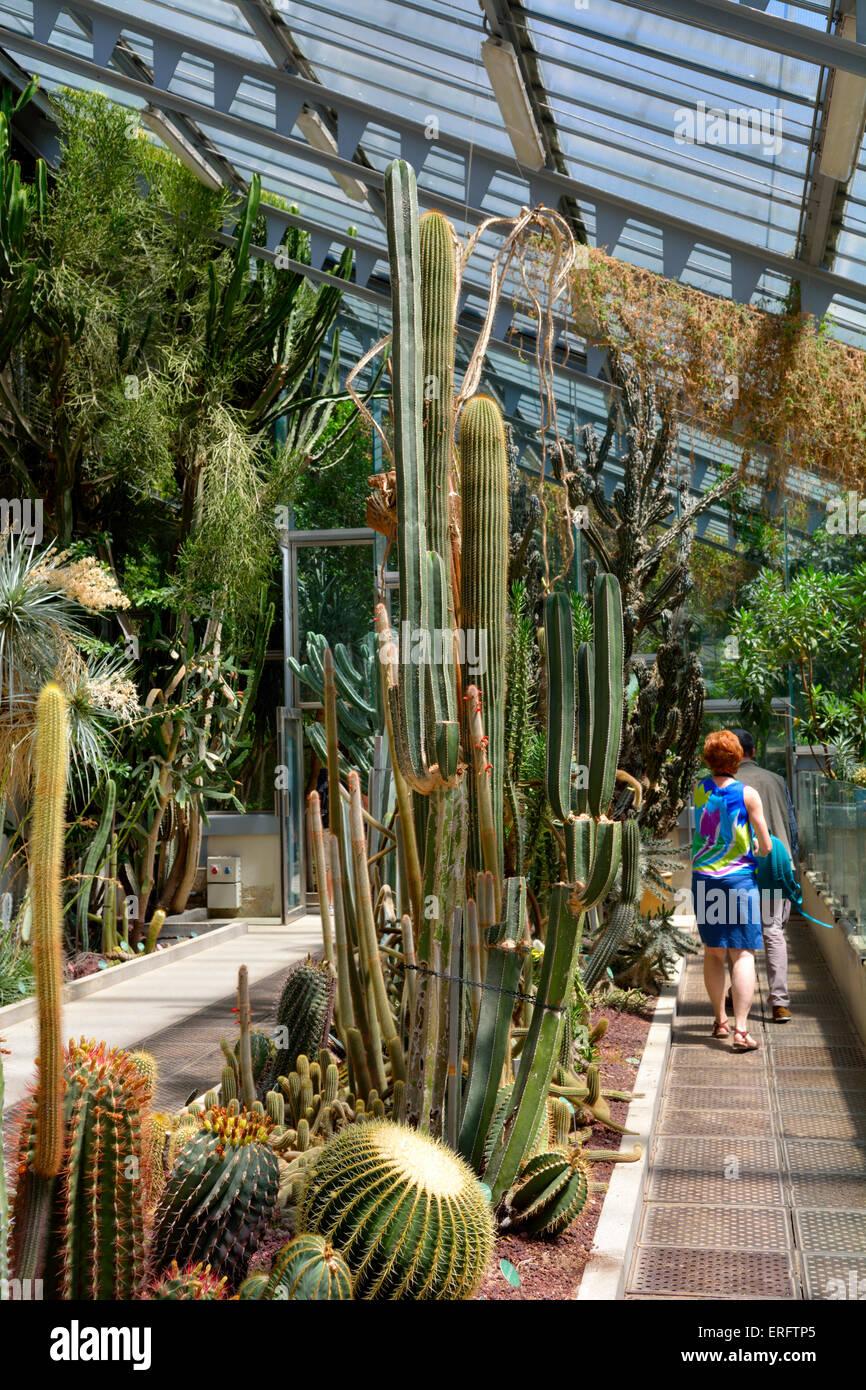 En el interior del invernadero de cactus del real jard n bot nico real jard n bot nico madrid - Jardin de cactus madrid ...