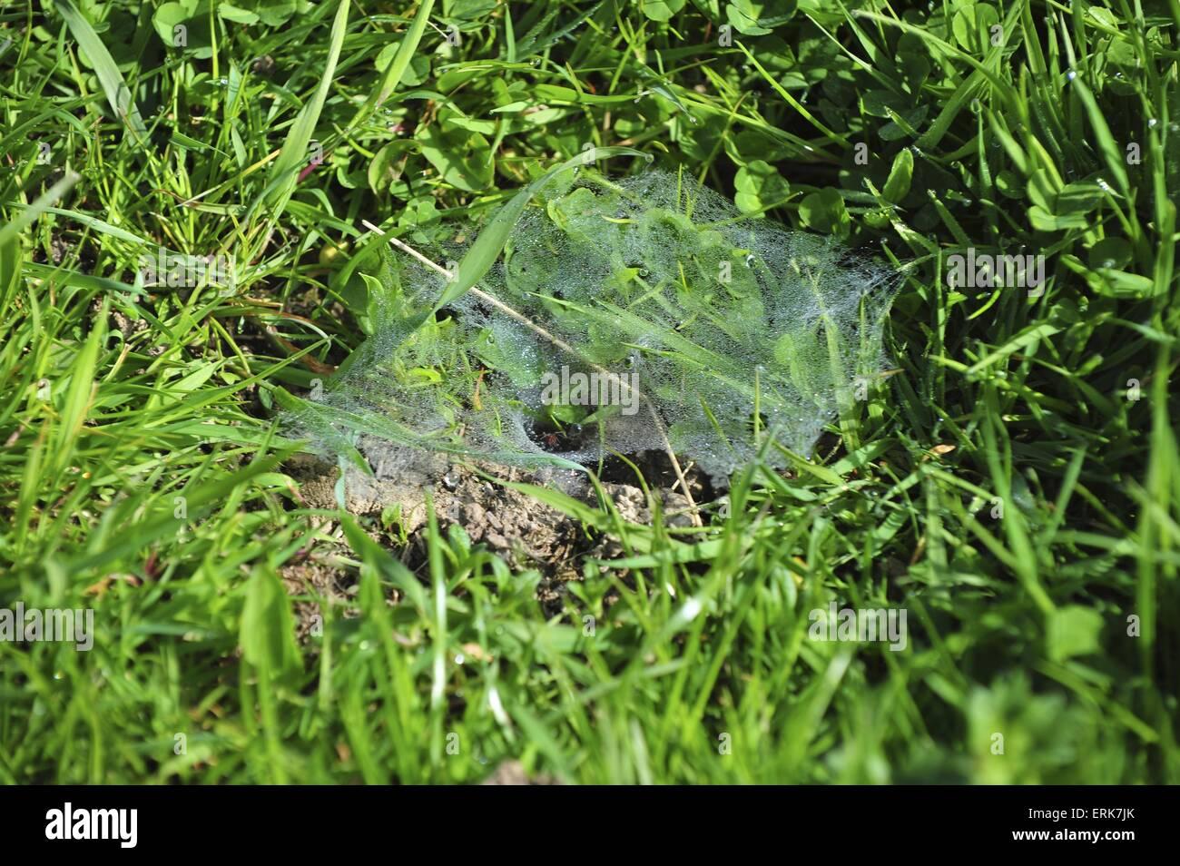 Tela de Araña Imagen De Stock