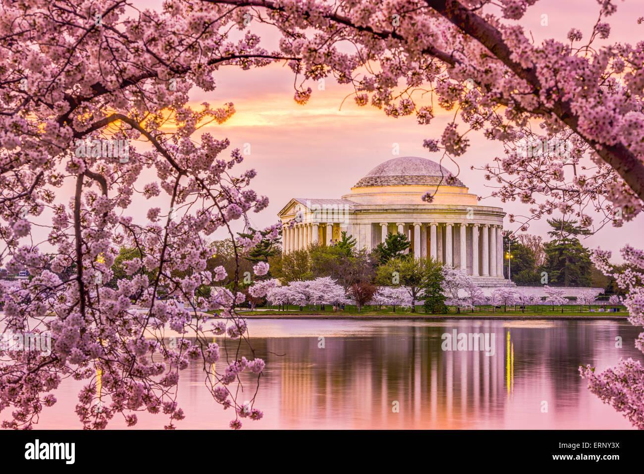 Washington, DC, en el Tidal Basin y el Jefferson Memorial durante la temporada de primavera de los cerezos en flor. Imagen De Stock