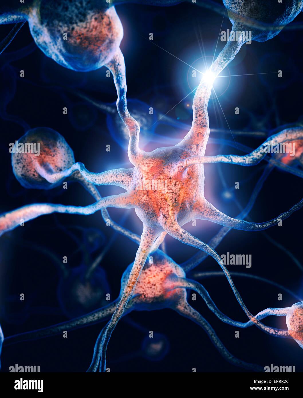 Red de neuronas y conexiones neuronales, células cerebrales, ilustración científica Imagen De Stock