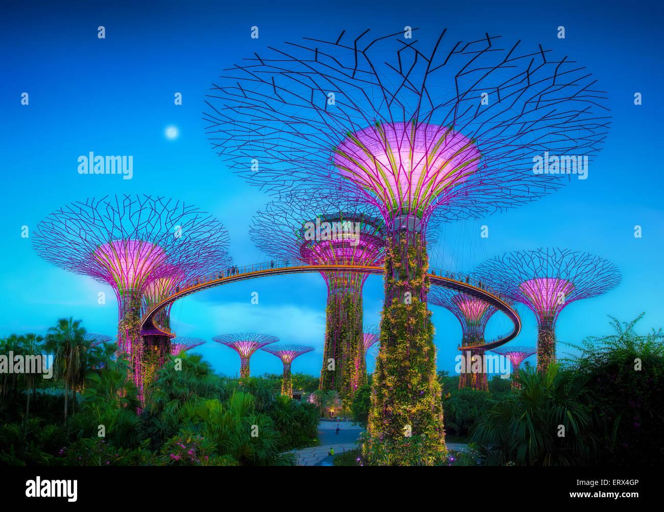 Singapur-jun 1: Noche de vista del Supertree Grove en jardines junto a la bahía sobre Jun 1, 2015 en Singapur. Imagen De Stock