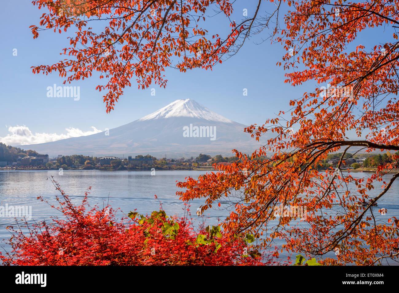 Mt. Fuji, Japón en el Lago Kawaguchi durante la temporada de otoño. Imagen De Stock