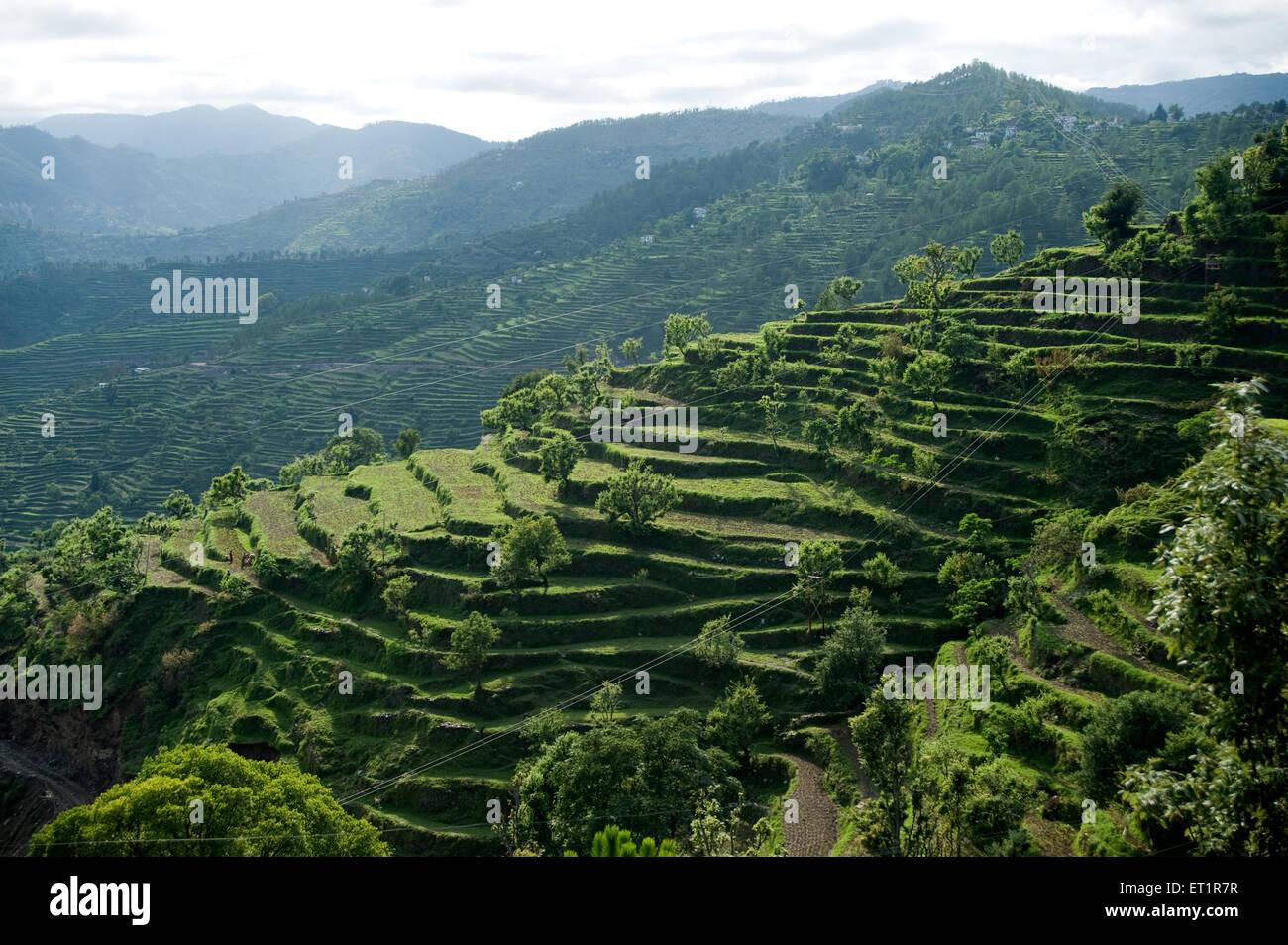 Los Cultivos En Terrazas En Uttarakhand India Asia Foto