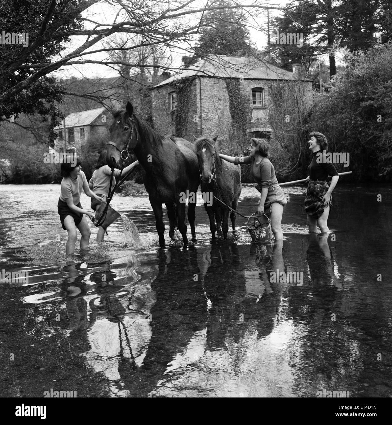 Las niñas lavando los caballos en la granja Notter, Cornwall. El 28 de abril de 1952. Foto de stock