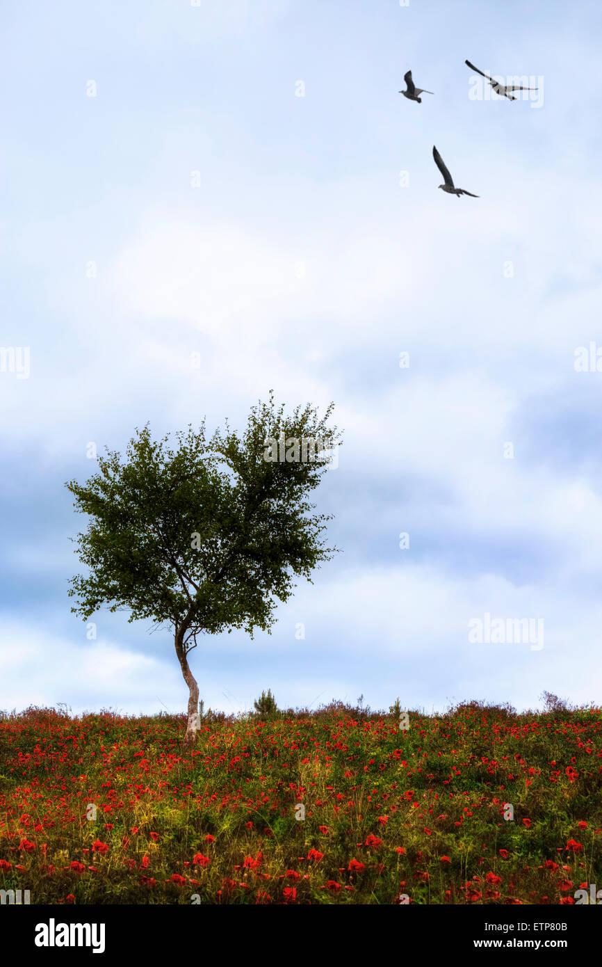 Un árbol solitario en medio de un prado con amapolas rojas y tres pájaros Imagen De Stock