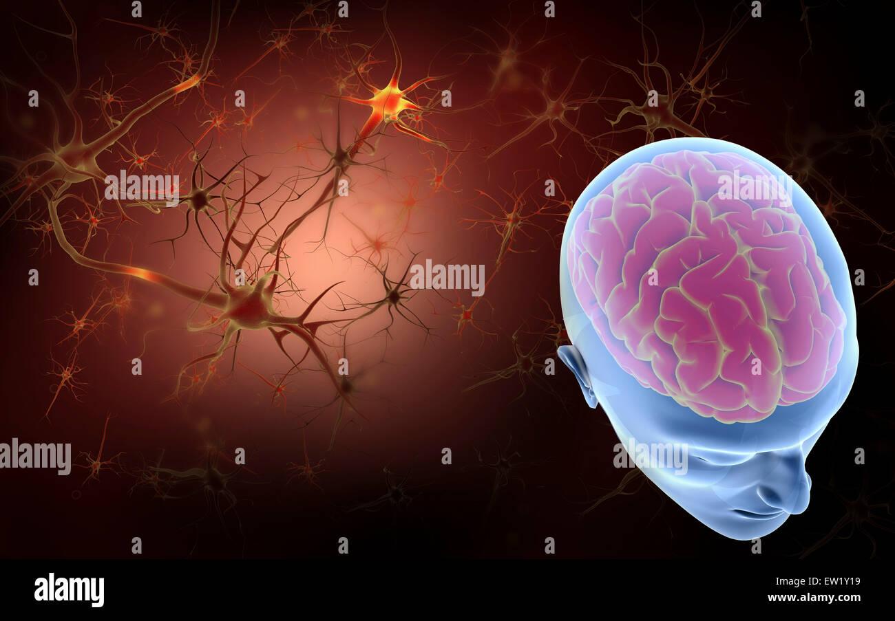 Imagen conceptual del cerebro humano con neuronas en segundo plano. Imagen De Stock