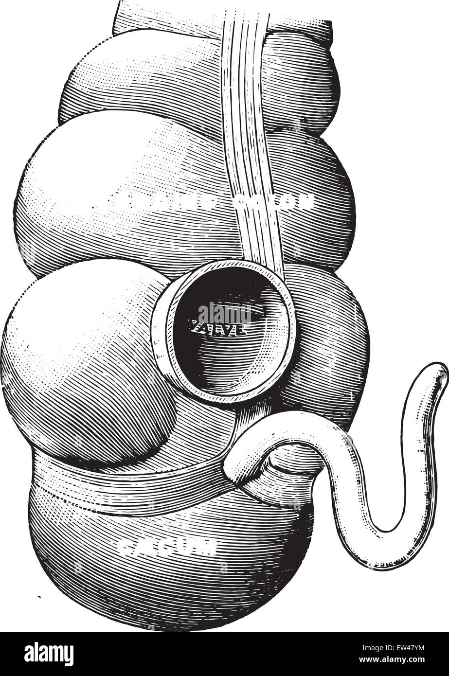 Diagrama que ilustra la unión del intestino delgado con la gran ...