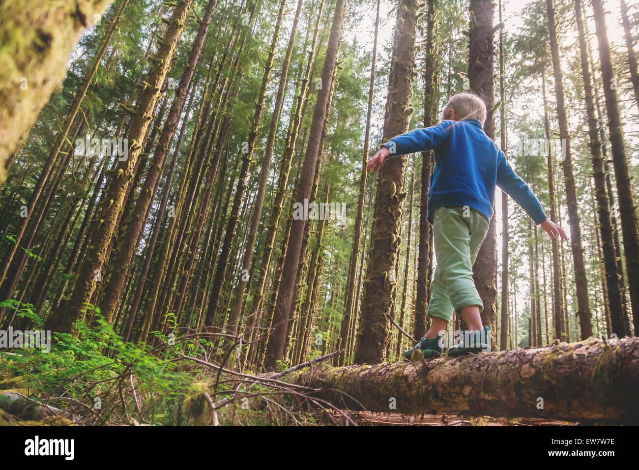 Ángulo de visión baja de un muchacho caminando a través de un tronco de árbol Imagen De Stock