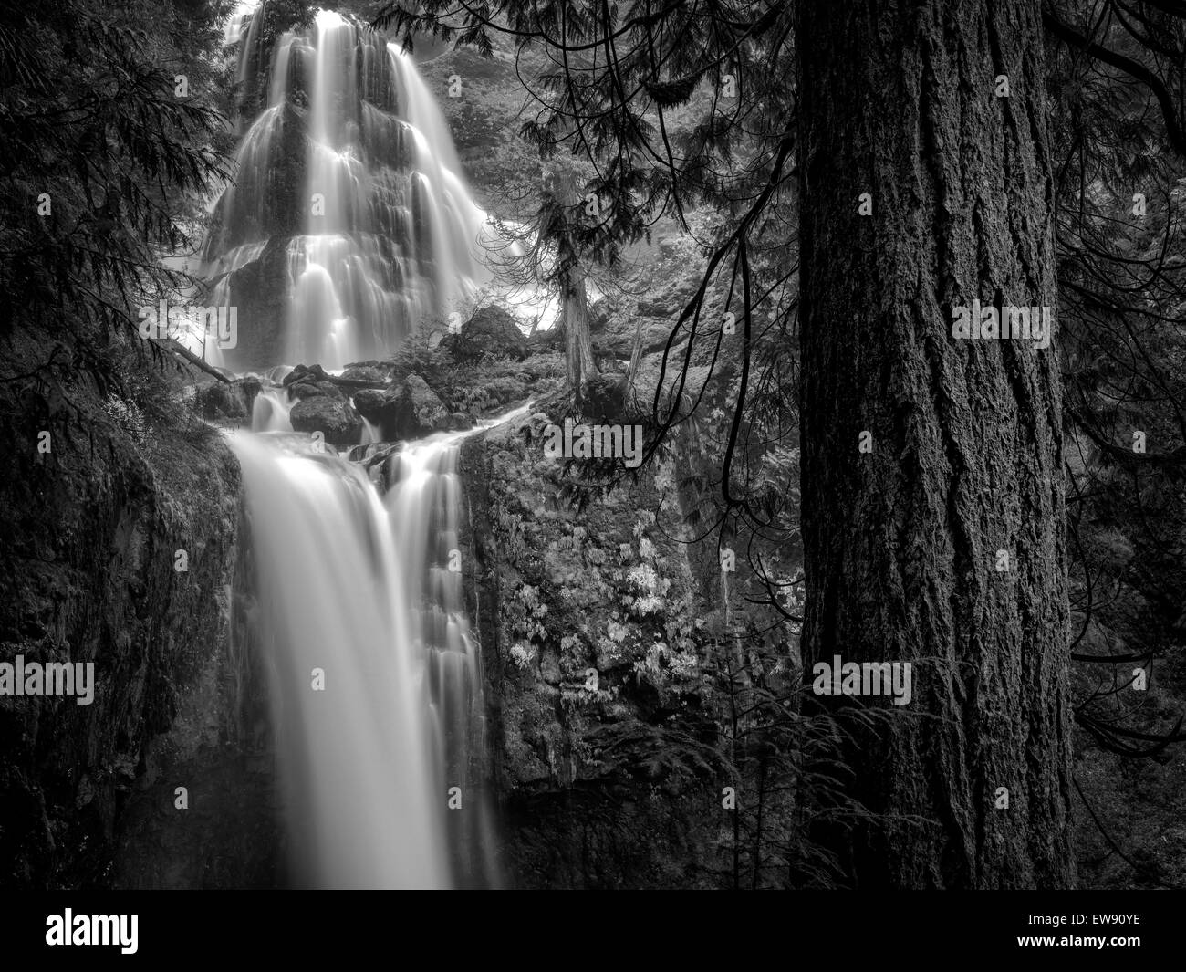 Falls Creek Falls, Washington. Imagen De Stock