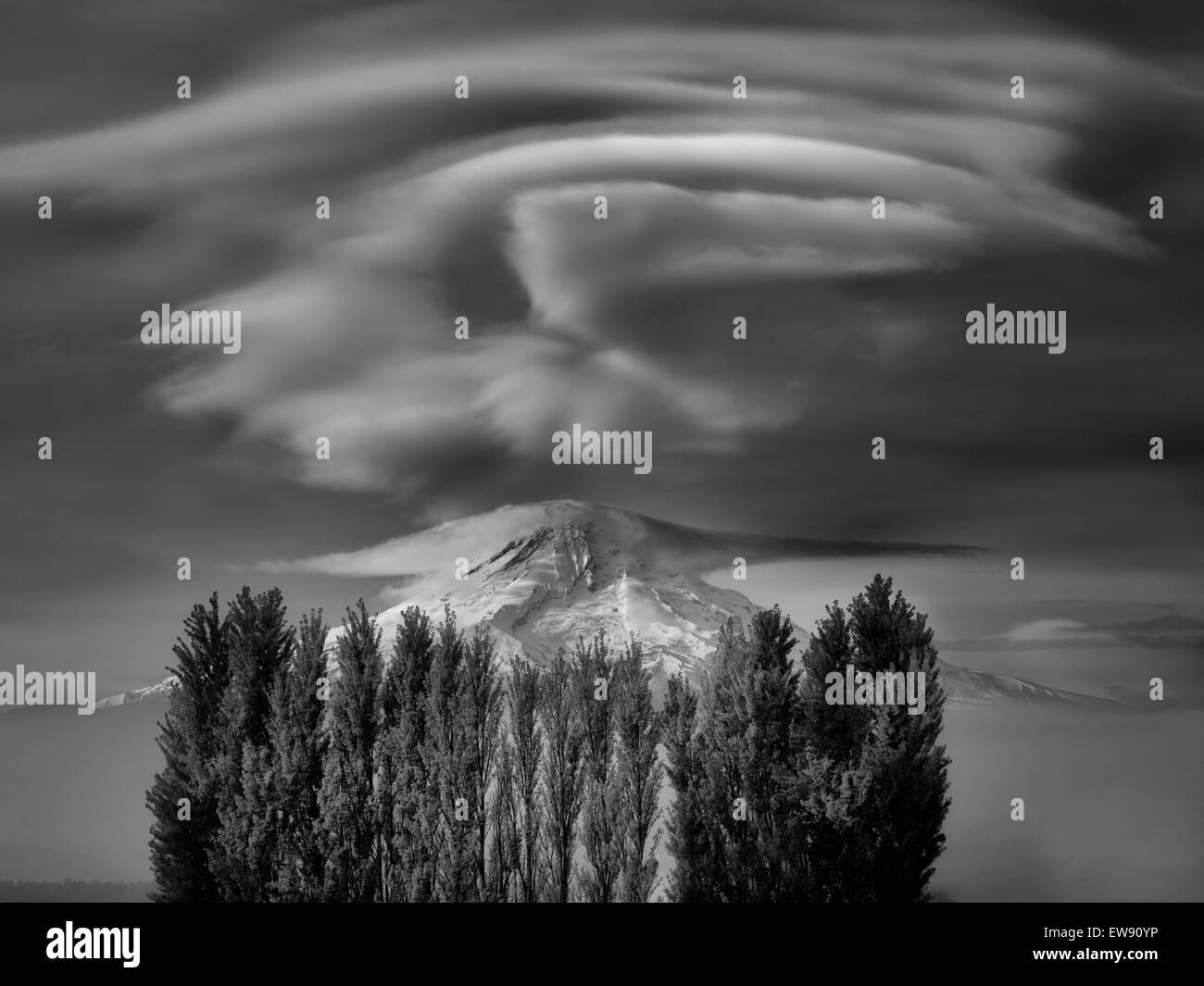 Mt. Capó y caída de árboles de chopo coloreada. Columbia River Gorge National Scenic Area, Washington Imagen De Stock
