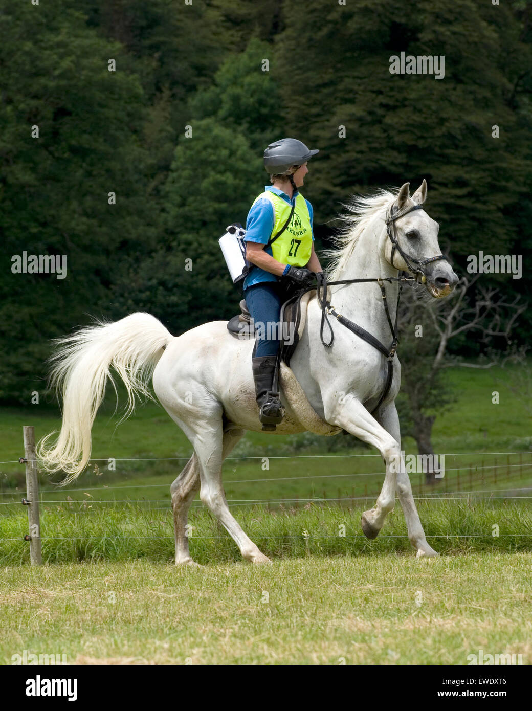 Endurance jinete en caballo árabe Imagen De Stock