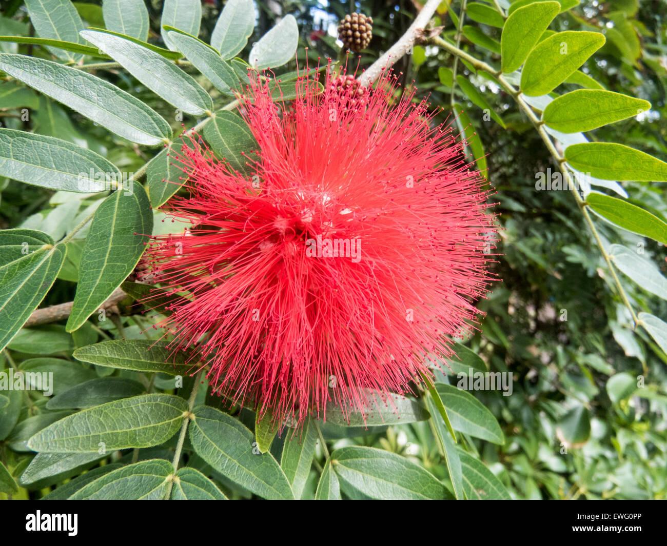 Flor roja difusa en planta verde Imagen De Stock
