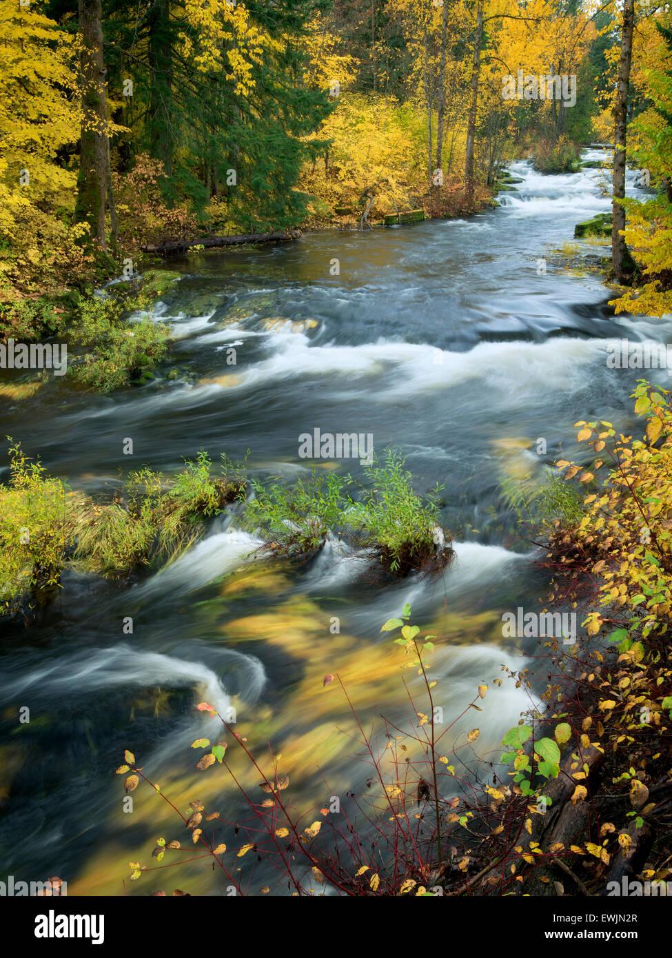 Trout Lake Creek en color en el otoño. Washington Imagen De Stock