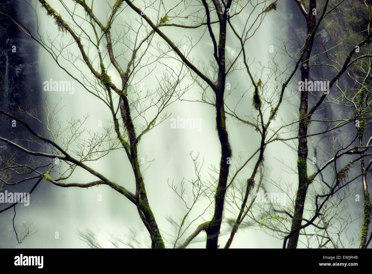 Cae un doble desnudo con árboles de invierno. Silver Falls State Park, Oregón Imagen De Stock