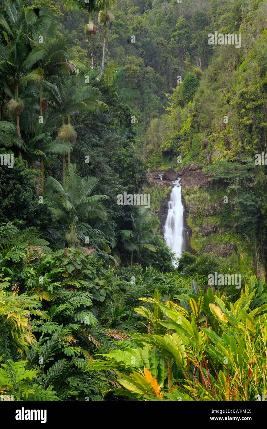 Akaka Falls. Akaka Falls State Park. Hawai, la Isla Grande Foto de stock