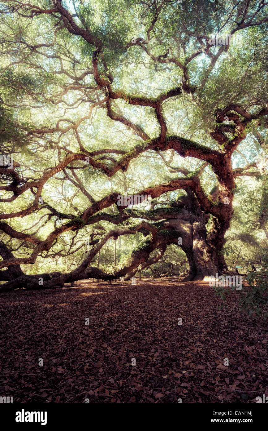 Ángel Encina, Charleston, Carolina del Sur, EE.UU. Foto de stock