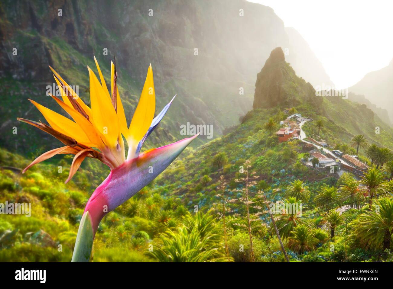 En vista Strelitzia y pueblo de Masca, Tenerife, Islas Canarias, España Imagen De Stock