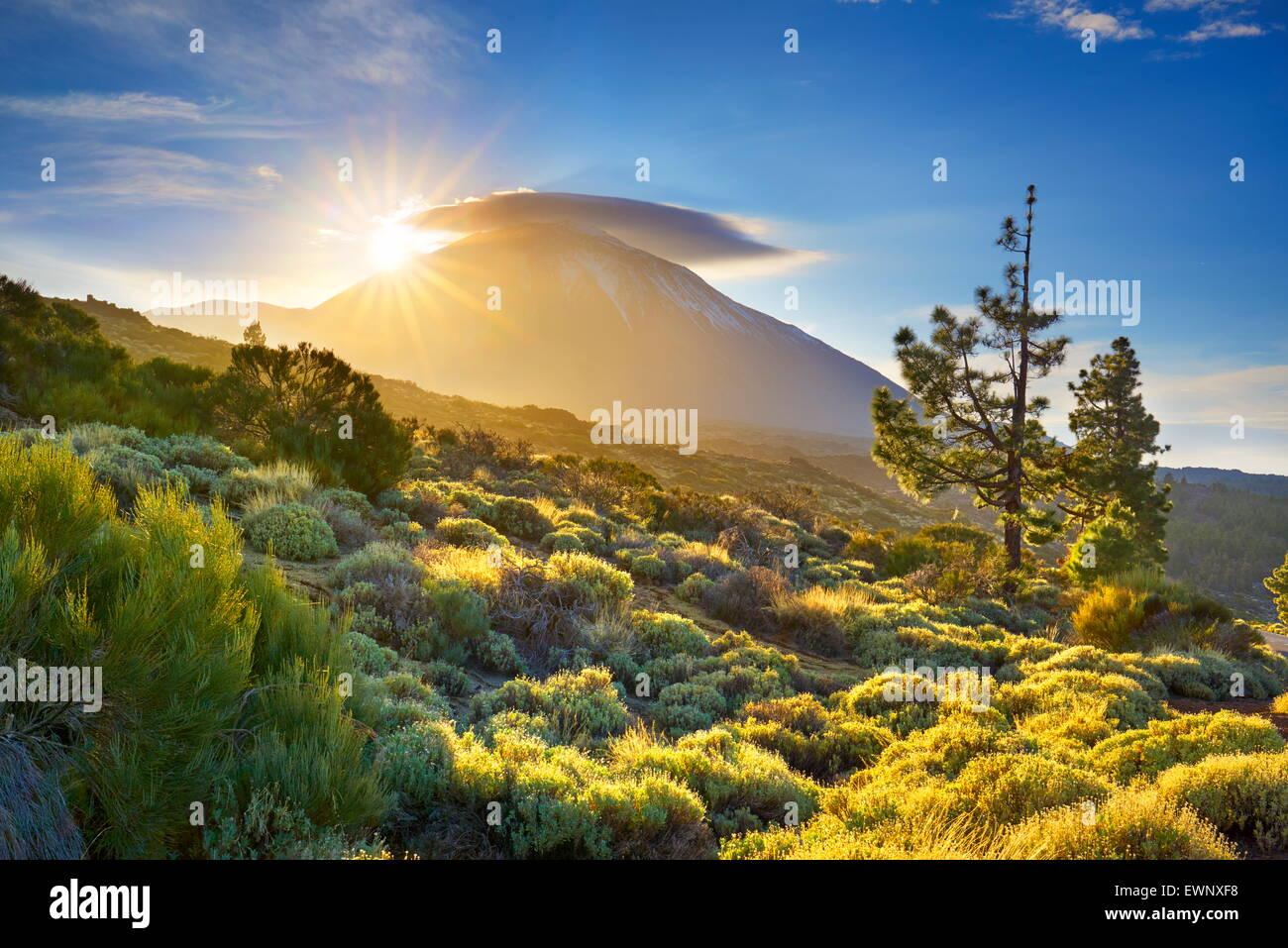 Al atardecer, el Parque Nacional del Teide, Tenerife, Islas Canarias, España Imagen De Stock