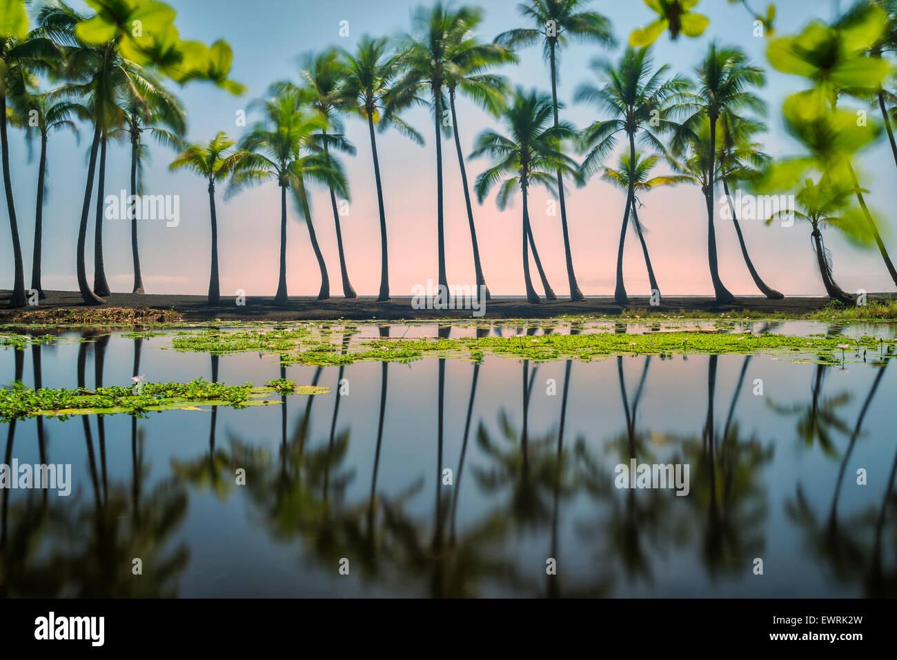 Palm reflexiones, playa de arena negra. Hawai, la Isla Grande Foto de stock