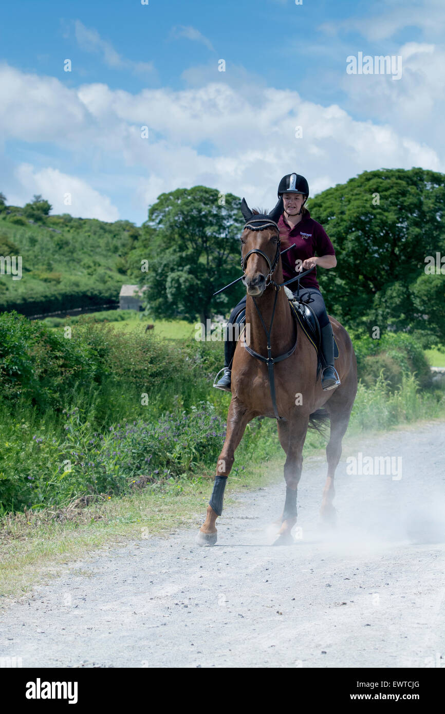 Jinete tratando de traer un animado caballo bajo control, Yorkshire, Reino Unido. Imagen De Stock