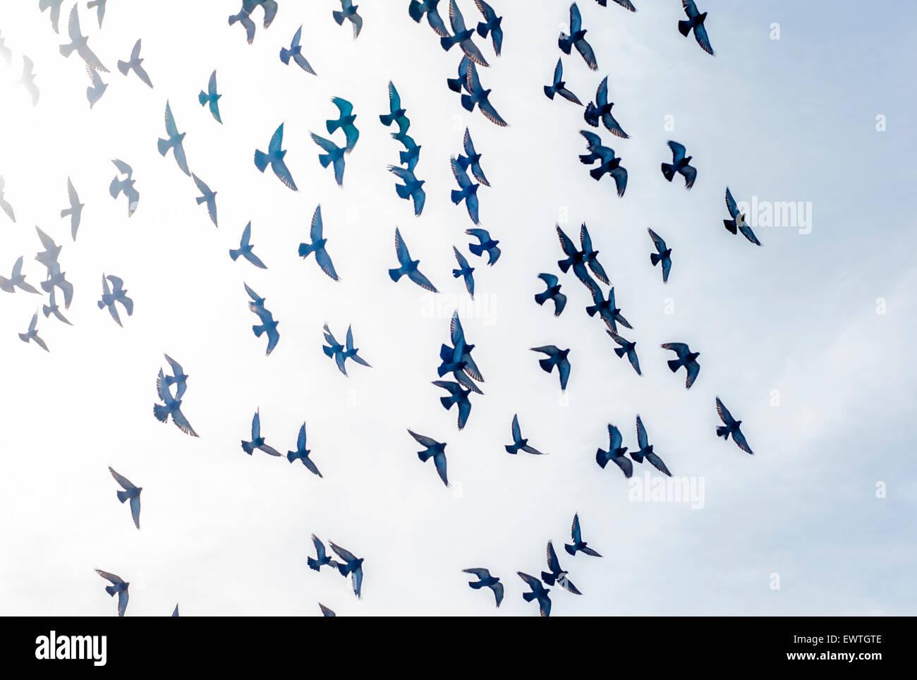Los pájaros que vuelan en el sol, en la Jolla, California Imagen De Stock