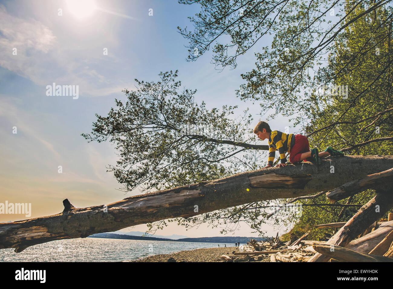 Boy escalada en un tronco de árbol por un lago Imagen De Stock